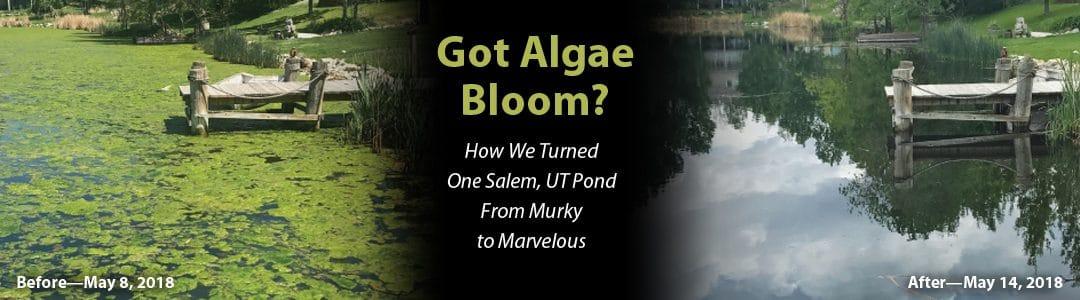 Got Algae Bloom? How We Turned One Salem, UT Pond From Murky to Marvelous