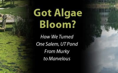 Got Algae Bloom? How We Turned One Salem, UT Pond From Murky to Marvelous
